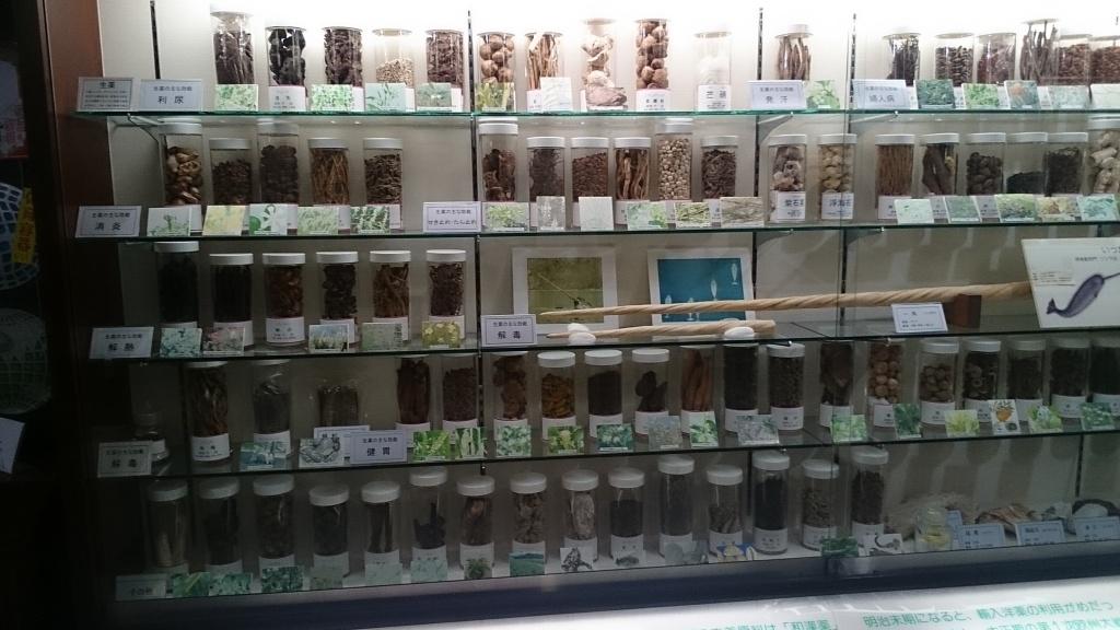薬草展示棚①